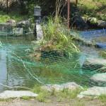 前庭の泉水(鯉がいます)